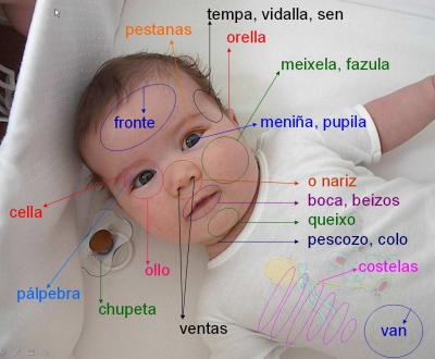 20090606170021-partes-do-corpo-2.jpg